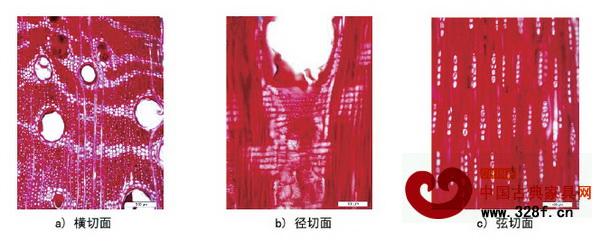 檀香紫檀木材微观构造照片